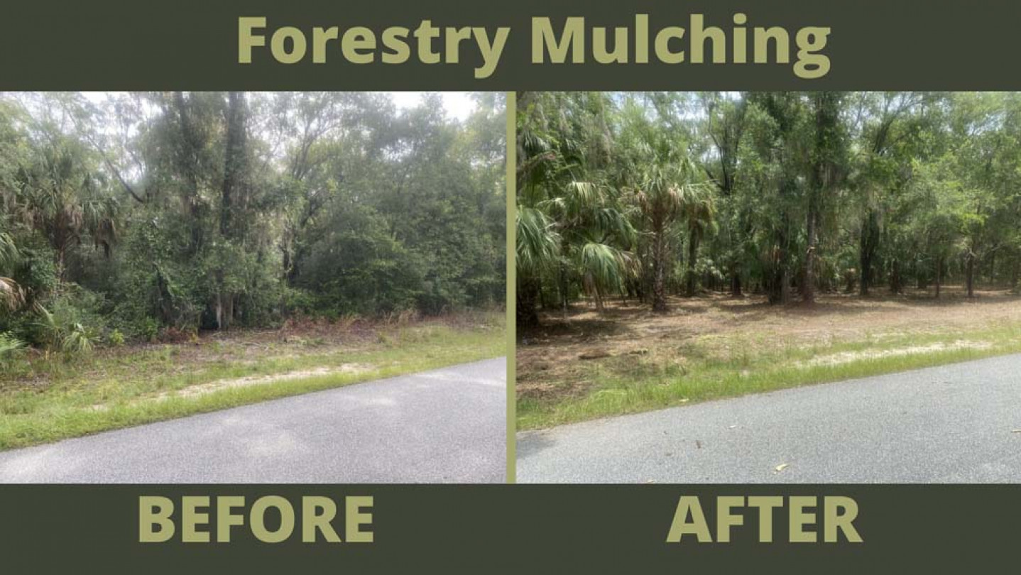 before and after photo of forestry mulching